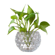 Household Decor Glass Vase Micro-landscape Jardiniere Creative Hydroponic Bottle Office Decoration Glass Vases