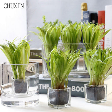 Korean Home Decoration Mini Bonsai Artificial Plant Green Wheat Seedling Glass Mini Potted Artificial Succulent Garden Decor