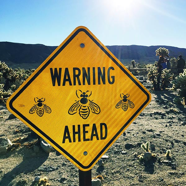Bees ahead in Joshua Tree National Park, California.