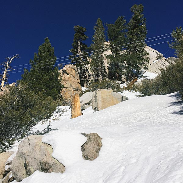 The Snowy Times: on a mountain high above Palm Springs, California.