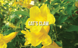 Cat's Claw (Uncaria tomentosa)