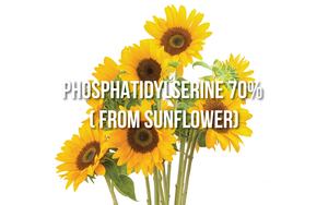 Phosphatidylserine 70% (from Sunflower)