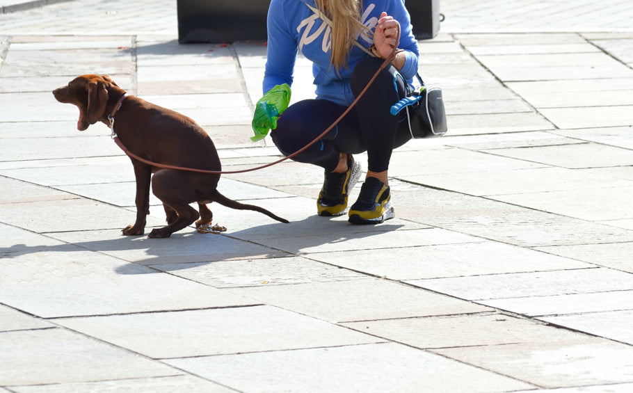 Read This If You Use Biodegradable Dog Poop Bags