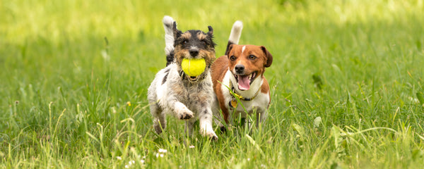 Cute Picture of Dogs Playing
