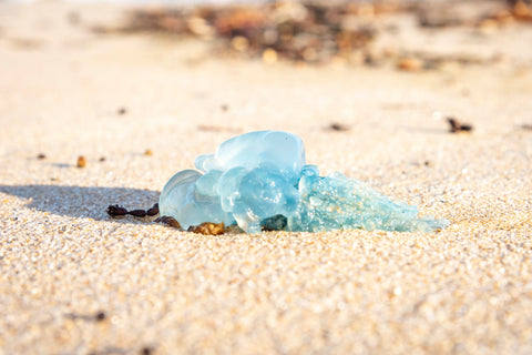 Melted Plastic Washed Up on the beach