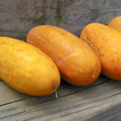 Heirloom Yellow Cucumber