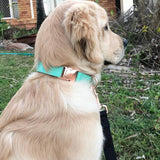 Mint Collar - BK Boutique Pets