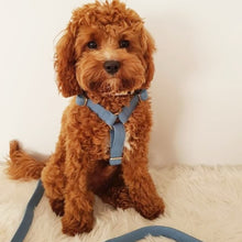 Load image into Gallery viewer, Sky Blue Harness - BK Boutique Pets