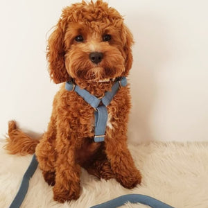 Denim Blue Dog Harness - BK Boutique Pets