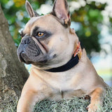 Black & Rose Gold Collar - BK Boutique Pets