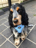 Adjustable Dog Harness - Tic Tac Toe - Blue chest harness