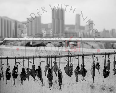 Fish on a Line | Photographic Print