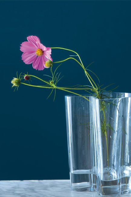 A glass vase with a single pink flower is profiled against a deep blue wall.