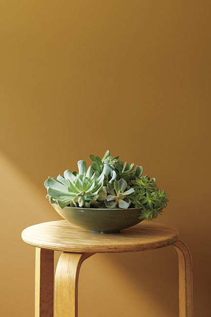 A yellow stool with a plant on top frames a yellow wall painted in Golden Retriever 2165-30.