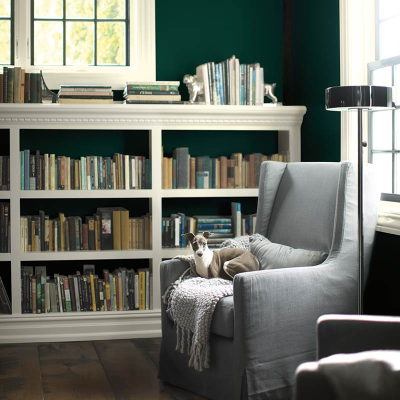 A dark green-painted library with dog nestled on comfy chair includes white paint on both trim and bookcases. Color of the Year 2019