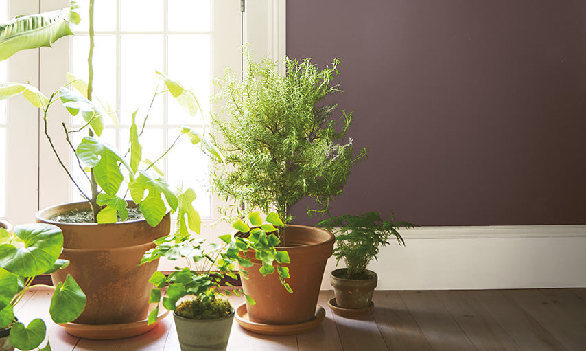 Potted plants in a room with walls painted Amazon Soil 2115-30.