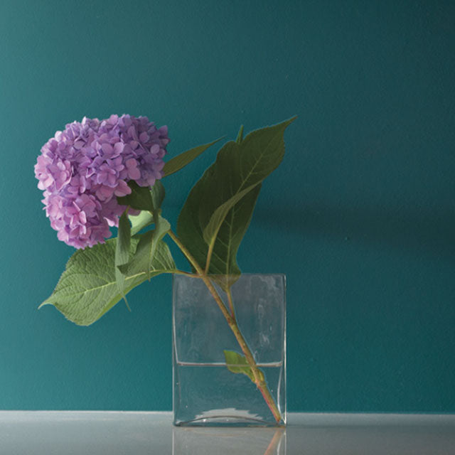 Pink hydrangea bloom against a teal wall.
