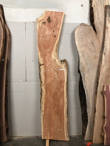 "Honey Locust (1206) 102"" L x 14-23"" W x 2.5"" T"