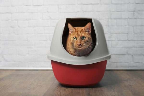 The 5 Best Cat Litter Boxes of 2020