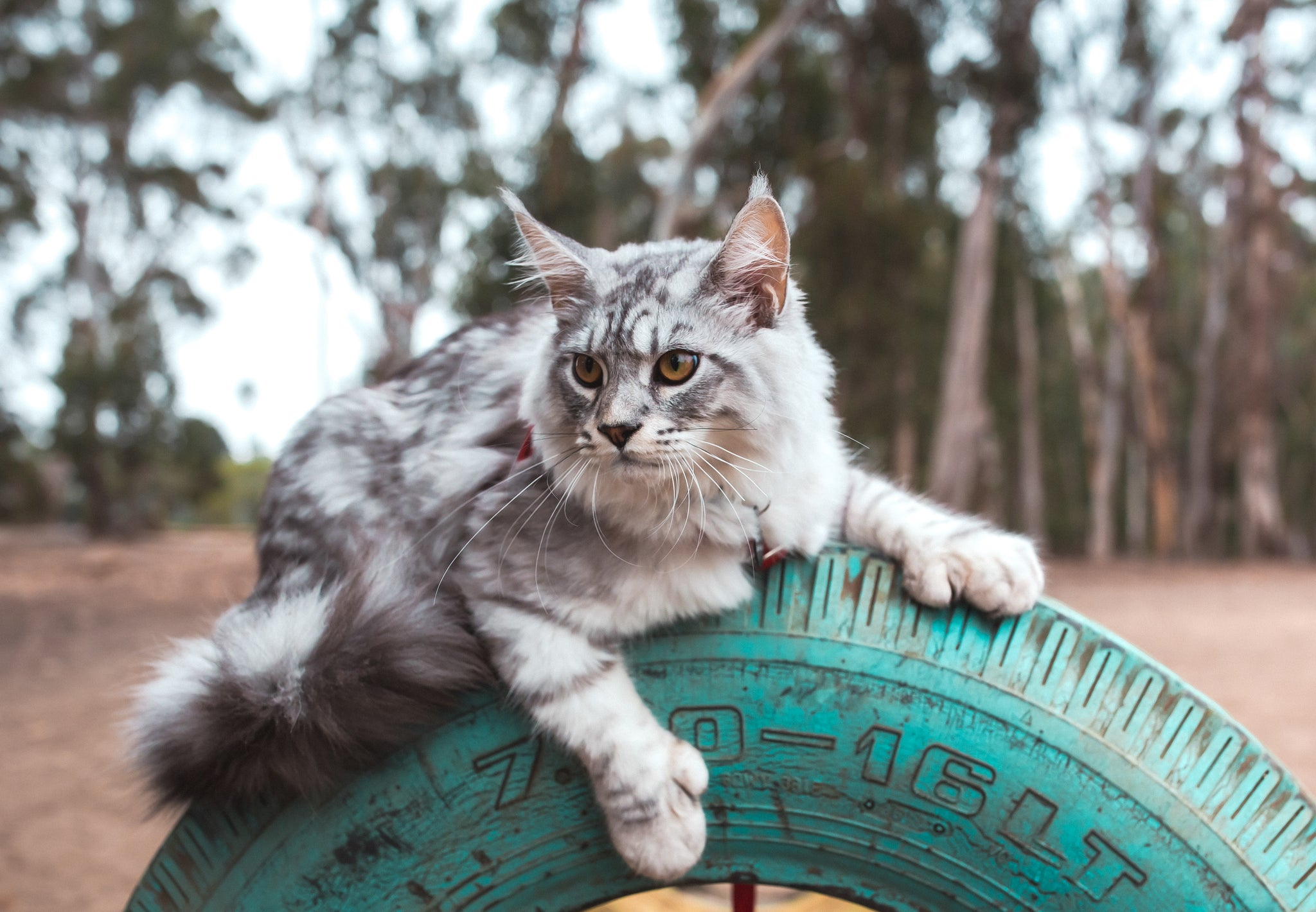 cat sitting atop tire