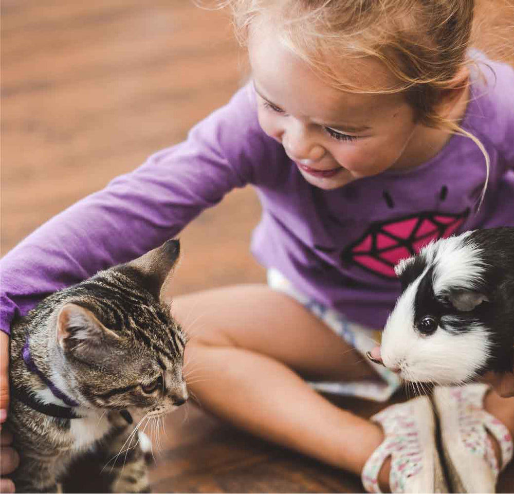 Child with kitten and guinea pig