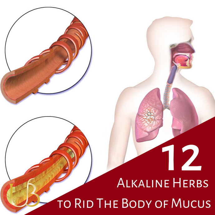 12 Herbs to Heal Mucous Membranes and Rid of Mucus - The Alkaline Way