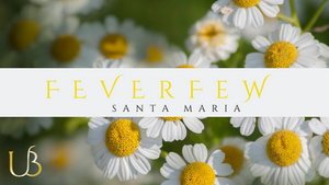 Feverfew ( Santa Maria ) - The Miraculous Plant
