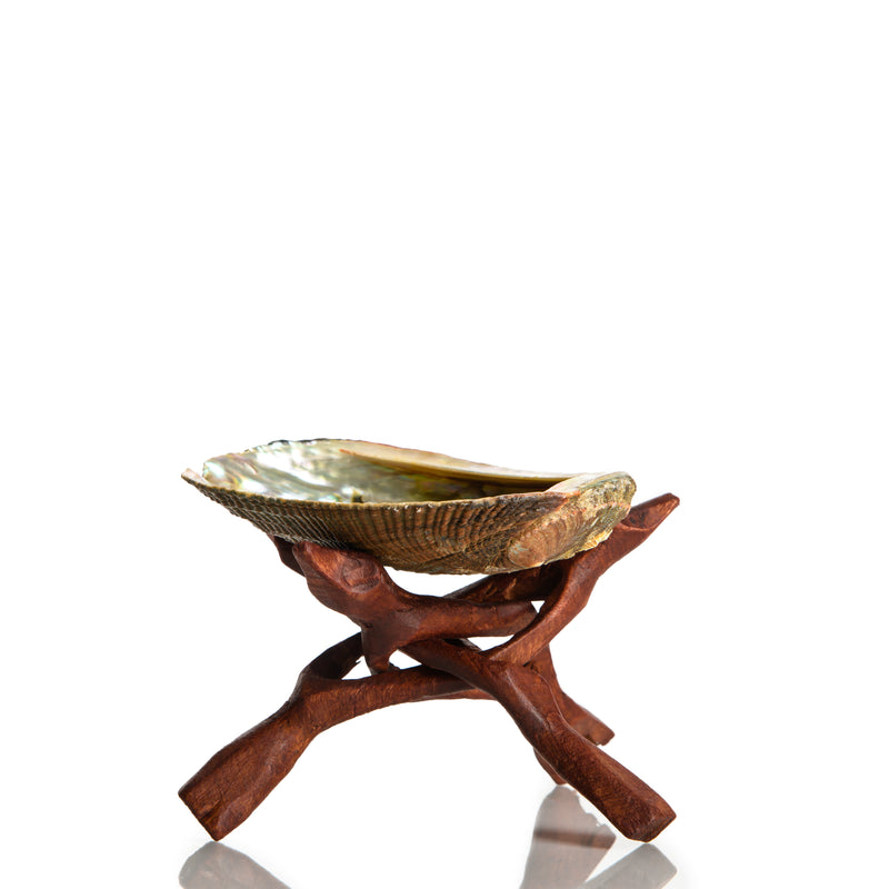 Abalone Shell & Natural Wood Stand