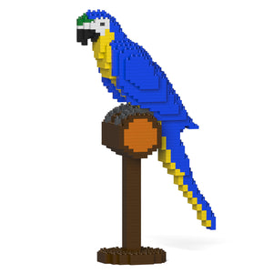 Blue-and-Gold Macaw 01S