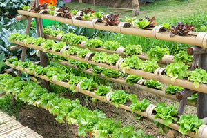 Tips for Setting Up Common Hydroponic Systems