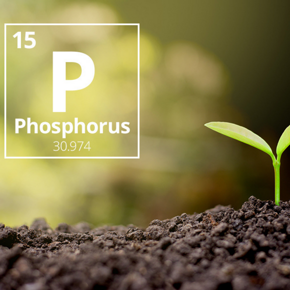 Phosphorus the energy element!