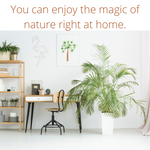 You can enjoy the magic of nature right at home