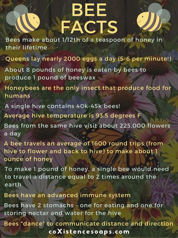 bee facts 2019 factual info