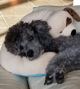 Grey Dog Pillow w/White Paws