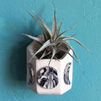 Wall Moon Phase Vase with Air Plant