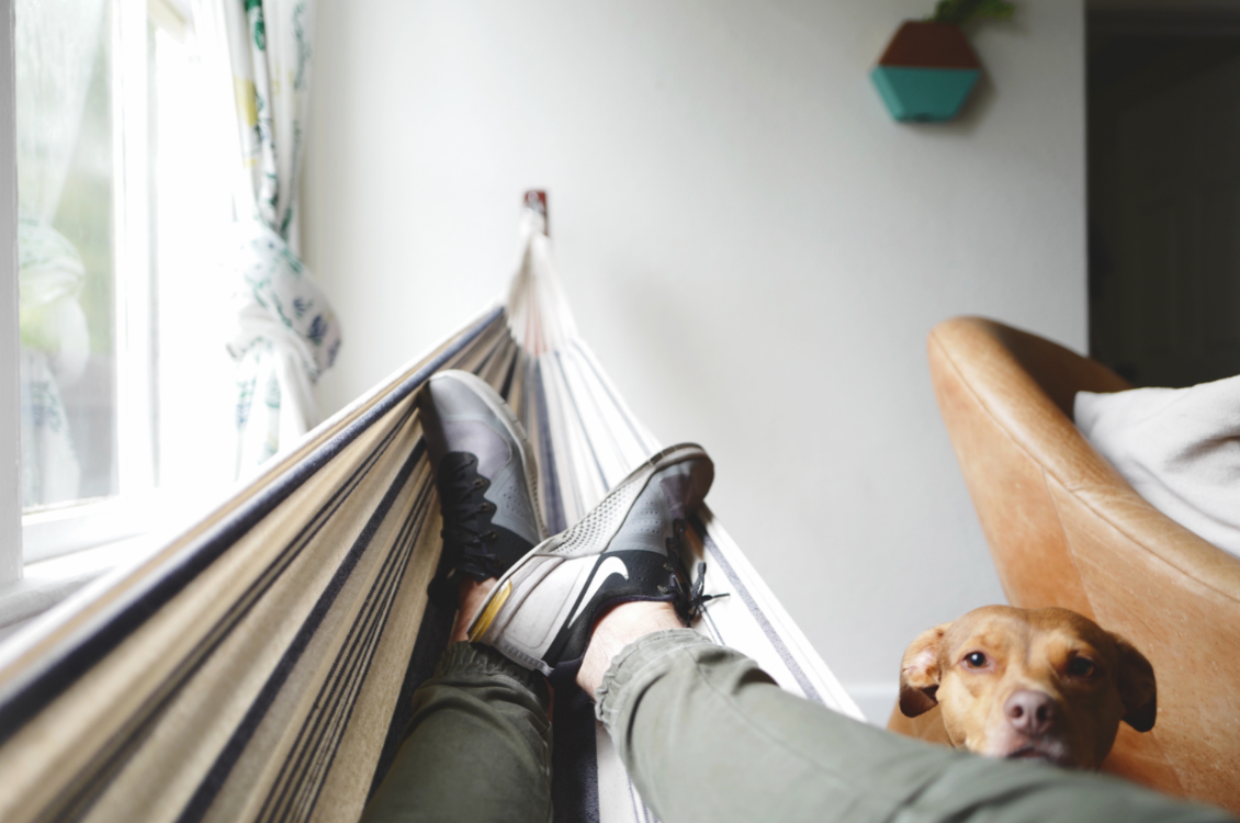 Relaxing on a hammock at home with a staffy, Coogee Sydney