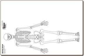 K1116-2x SKELETAL SYSTEM - BOARDS ONLY - K1116-2x