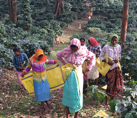 Rwanda female led coffee industry