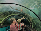 Caperly-Childrens_gifts_Father_son_looking_at_shark_Sydney_aquarium