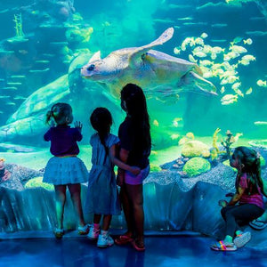 Four children experiencing and watching fish and a turtle  at Sydney Aquarium