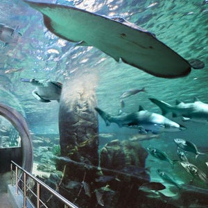 Aquarium Entry Tickets