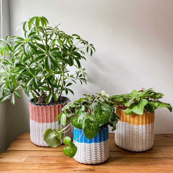 boxi planters ~ color bands