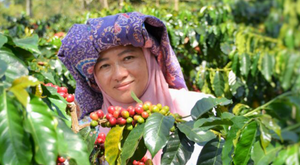 Cafe Femenino Coffee: women in coffee