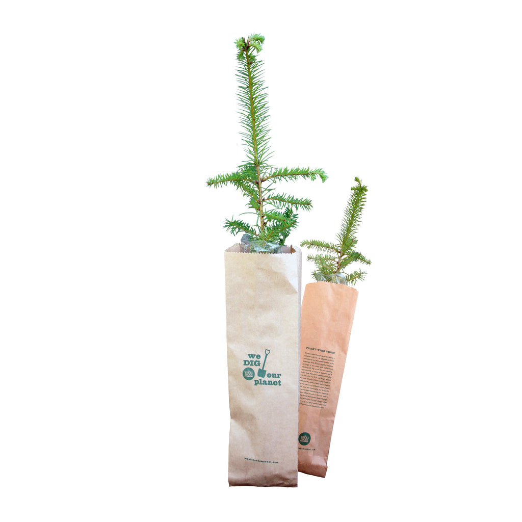 The Jonsteen Company - Kraft Bag Seedlings