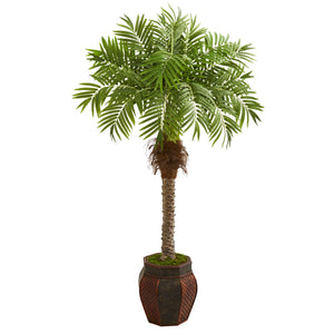robellini palm silk tree in decorative planter