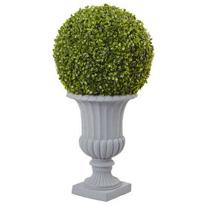 boxwood ball topiary in grey urn