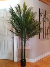Load image into Gallery viewer, 7 foot big robellini palm tree for sale
