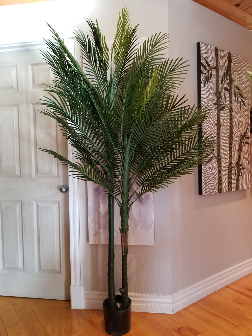 7 foot big robellini palm tree for sale