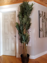 Load image into Gallery viewer, 7 foot phoenix palm tree for sale