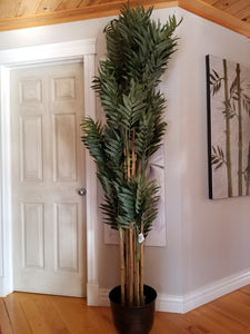 7 foot phoenix palm tree for sale